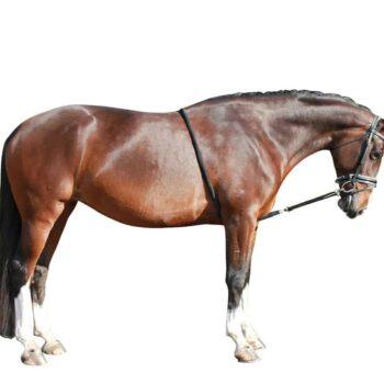 Pomoc do lonżowania dla konia QHP akcesoria-lonzowanie
